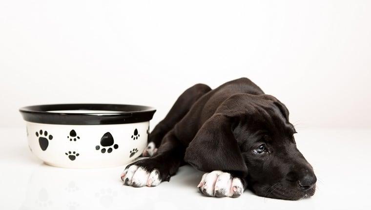 kutya fogyás