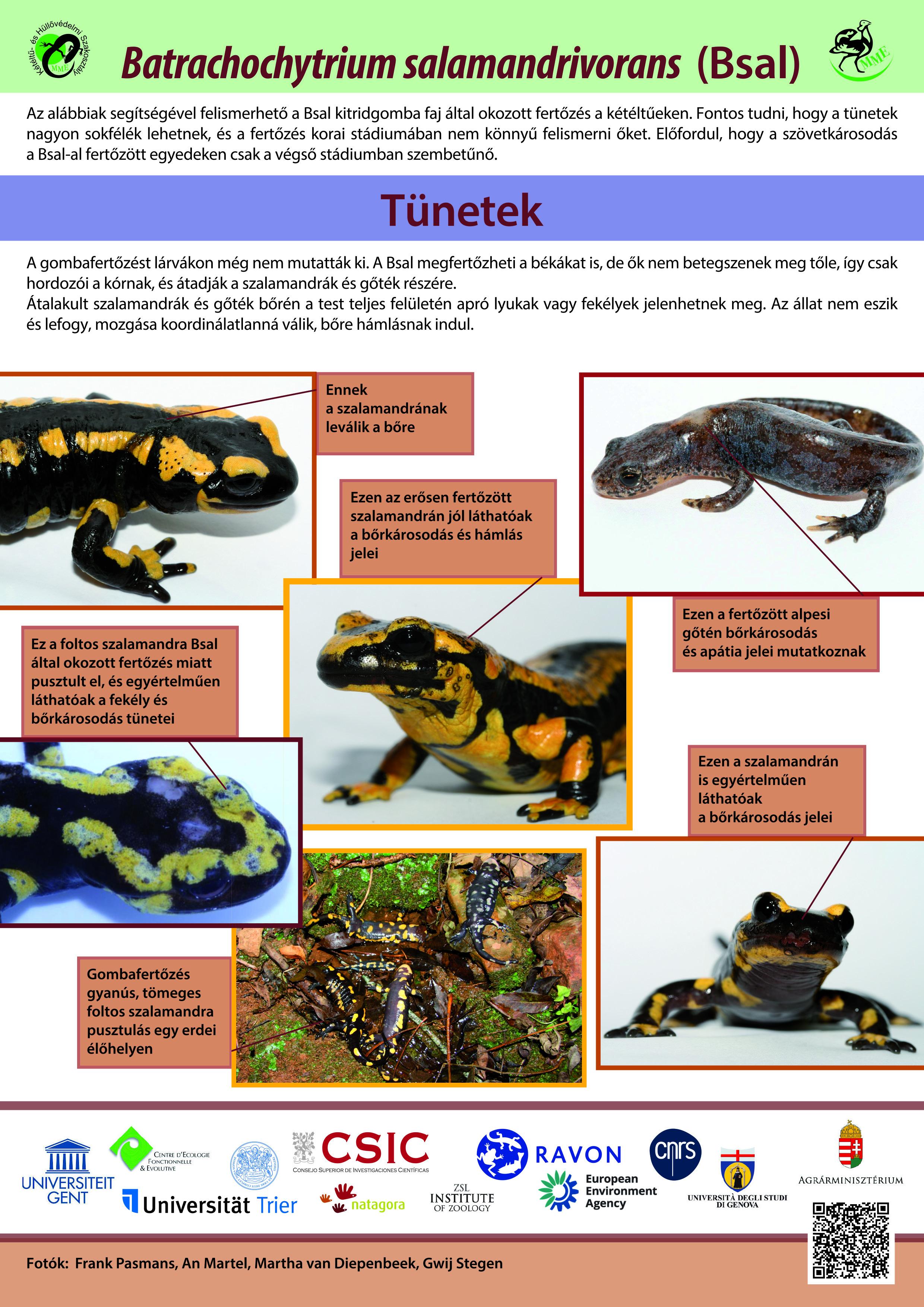 Törzskönyv - A mór teknős