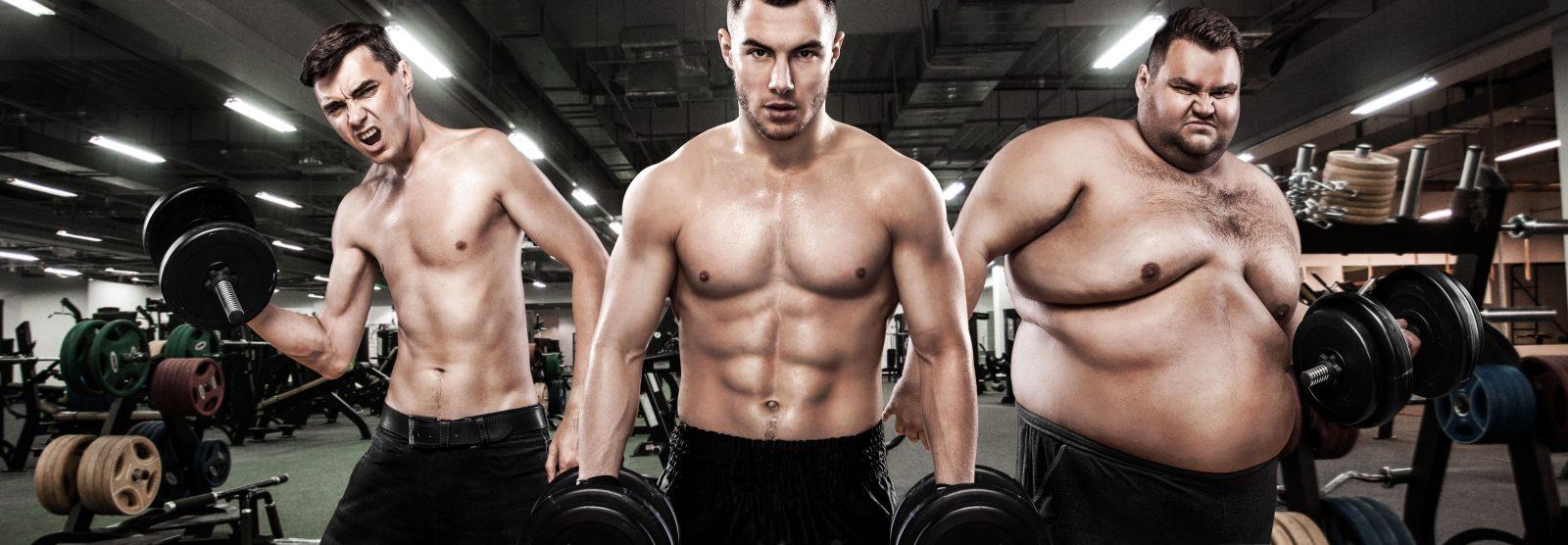 Zsírégető és állóképességet növelő táplálékkiegészítők hatása a testedre, Zsírégető szerv