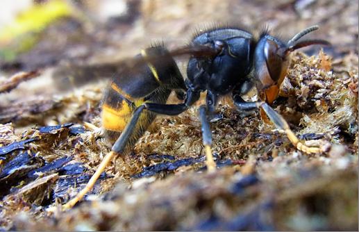gyilkos méhek zsírégető mellékhatásai