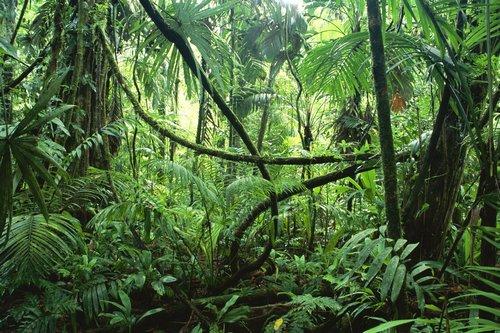 lefogy az erdő