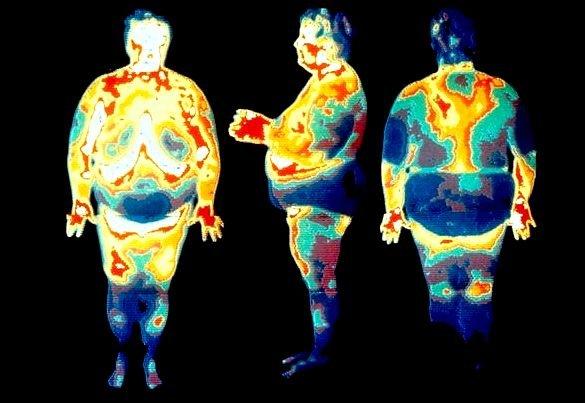 távolítsa el a zsírt a belső szervekből