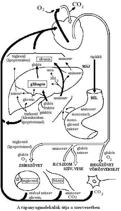 webb simpson fogyás bio fogyókúra