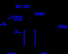 L-tirozin - Vitaminok