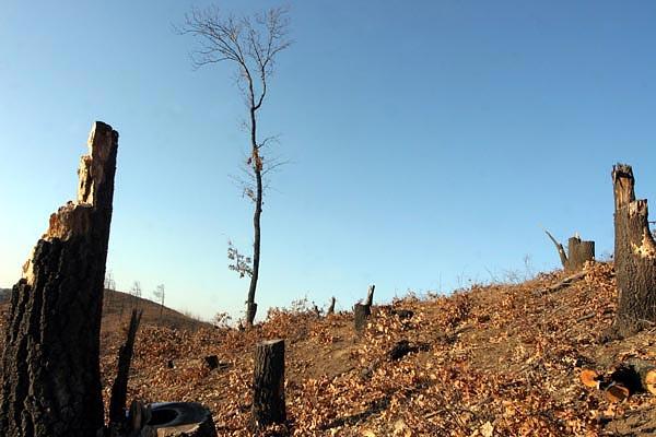 Hová tűnt az arlói erdő?