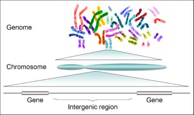 fogyni a DNS- ével