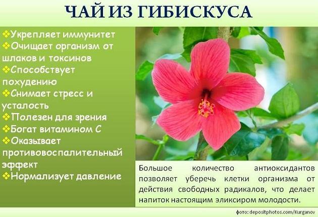 Hogyan lehet a Hibiscus teát fogyni?